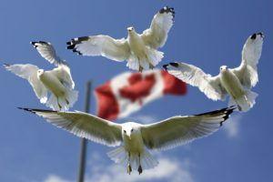 Виза в Канаду для украинцев полезная информация фото